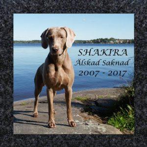 Bildplatta med foto: Shakira - Älskad Saknad